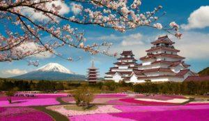 Цветение сакуры в Японии в 2021 году начнется на 10 дней раньше