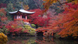 В Японию на фестиваль глицинии