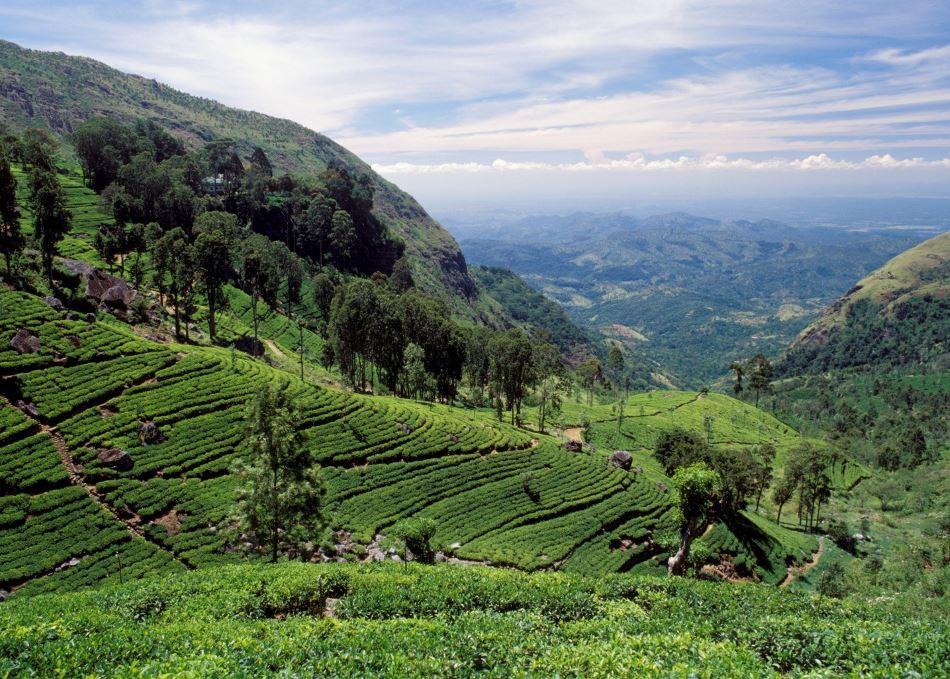 Шри-Ланка отменяет плату за визы