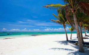 Мексиканские пляжи под грудой водорослей