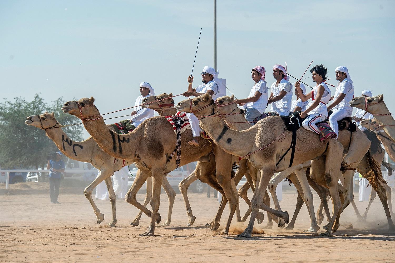 В Саудовской Аравии проходят гонки на верблюдах
